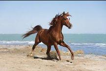 Horses / by Alessandra Malabocchia