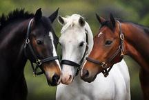 Horses / by Shar Lynn