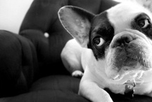 French Bulldogs, Your Argument is Invalid. / Because French Bulldogs win. Forever. End of story. Get outta town. / by Ophilla Laster