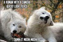Funny / My sometimes warped sense of humor... / by Tiffany McCarthy