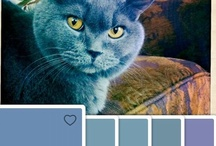 #colorcapture / What have you color captured lately? / by Benjamin Moore