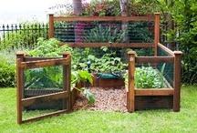 My Backyard Gardening/Flowers / by Jo Ellen McCabe