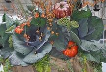 Fall / by Cathy Murawski