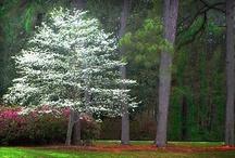 I love tree's! / by Pamela Brown