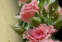Ramblin' Roses / by Susan Robbins Mauriello