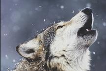 Wolves / by Nancy Floyd