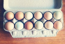 Eggs in a Basket / by Wallace Farms