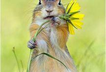 Wildlife / by Marietta Doran