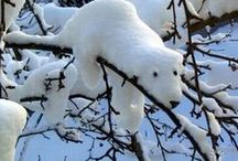 Snowman of All Kinds !!! / by Bonnie Brock