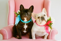 frenchies / by Sarah Crawford