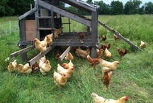 Chicken coops / by Seacoast Eat Local