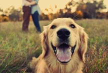 Pet Session Photography Ideas and Tips / by Kristina Betz