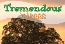 Tremendous Trees / by Amanda Bennett Unit Studies