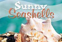 Sunny Seashells / by Amanda Bennett Unit Studies