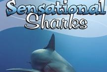 Sensational Sharks / by Amanda Bennett Unit Studies