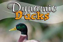 Dynamic Ducks / by Amanda Bennett Unit Studies