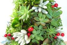 Christmas trees & decorations / by Cathy Walackas Estey