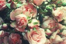 flower arrangements / by Kristen Rettig
