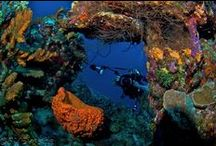 Sandton Kura Hulanda Lodge and Beach Club, Go West Diving - CURACAO  / SANDTON KURA HULANDA LODGE AND BEACH CLUB AND GO WEST DIVING - BOOK AUGUST 6 TO SEPTEMBER 15, 2013. www.MaduroDive.com / by MaduroDive