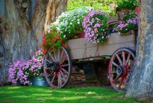 Yard/ garden / by Tracy Jones