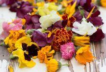 Flora / by Priya Patel