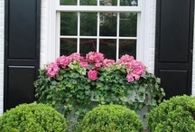 Windowboxes / by Denise Truesdale