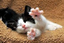 Cats / by Carly Rohrbacker