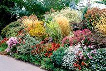 Garden / by Grace Dean