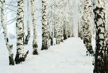 Be Inspired by the Winter Wonderland / by Bernadette Fox