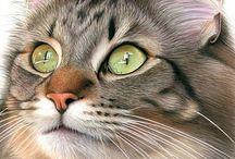 Kitties / by Lisa Cansler