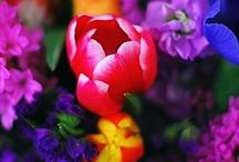 Flowers, gardens, pathways / by Debby Kirby