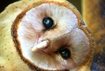 Hooters Owls / by Pamela Neill