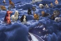 Advocates for Animal Cruelty! / by Pamela Neill