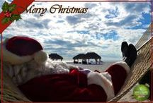 Christmas In Paradise / The most magical time of the year / by MarcoMarriott