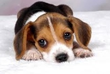 Precious Puppies / by Lisa Biernacki