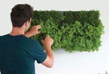 garden_edible garden & permaculture / by Orsi Glavanovics