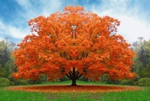 Fall Colors / by Melissa Henkel