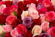 Roses / by Melissa Henkel
