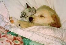 kittens & puppies / by Collette Loves teaching kindergarten!