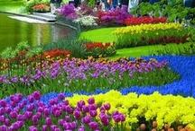 garden / by Mary Draxler
