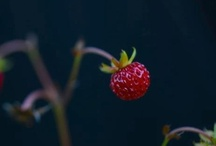Gardens / by Janicke Vinje