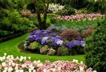 garden / by Linda Rahman