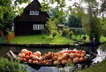Autumn / by Ellen White