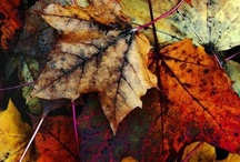 I Heart Autumn / by Erin W
