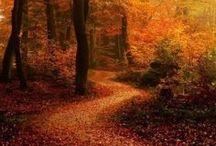 Autumn / by Deeon