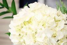 Flowers / by Regina Penner