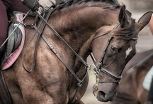 Horses / Horses - adore them! / by Mieko2