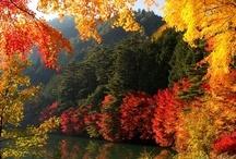 Fall is the Season / by Liz Steenbeeke