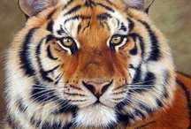 Tigers / by Kathleen Kennedy Gerardi