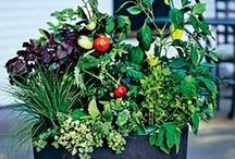 Going Green from Garden to Table / This board provides tips and tricks for growing and maintaining sustainable gardens...which you can do right in your own backyard!  / by Mountain House